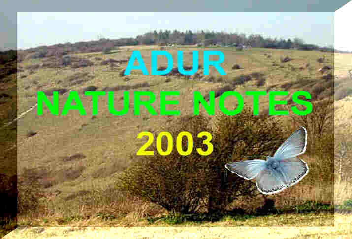 Link to Adur            Valley Nature Notes 2003