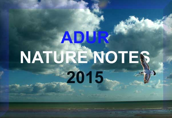 Adur Nature Notes 2015