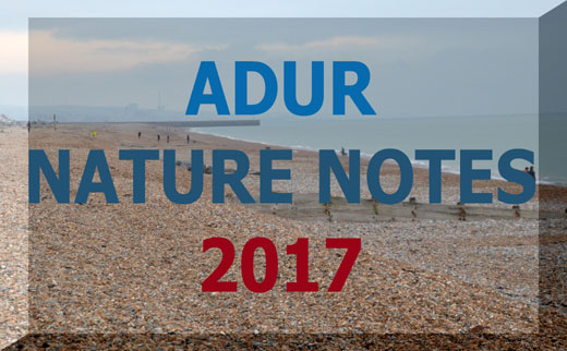 Adur Nature Notes 2017