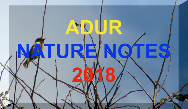 Adur Nature Notes (Link)                     2018