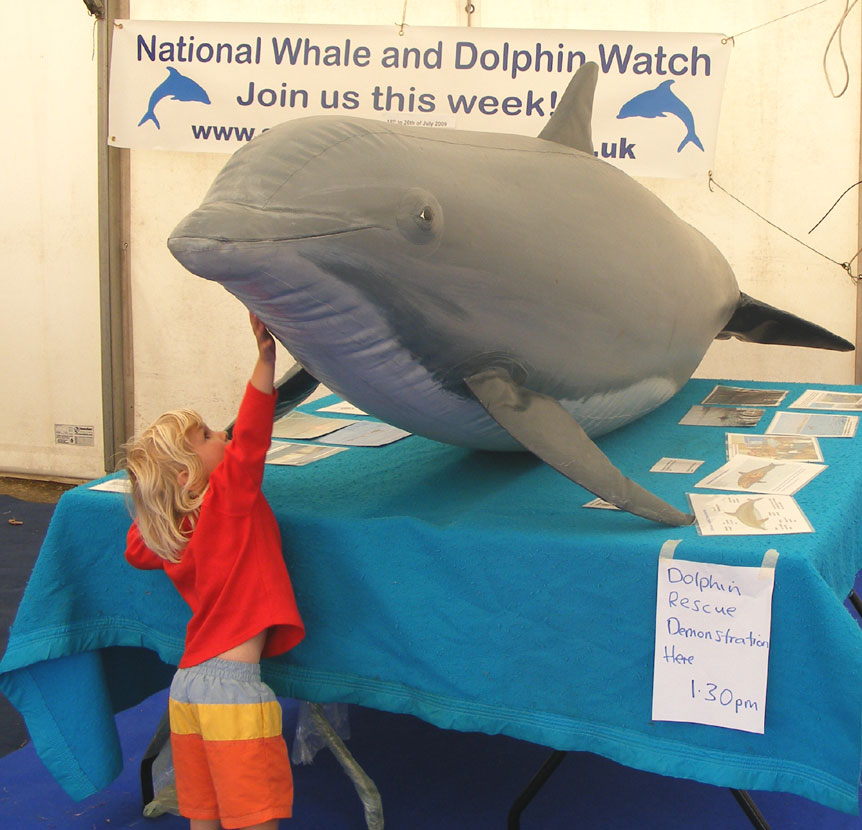 Life size inflatable Dolphin provided by the Sea Watch Foundation