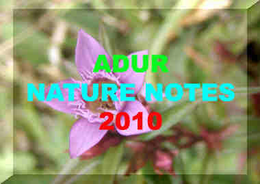Link to the Adur 2010 Nature Notes pages