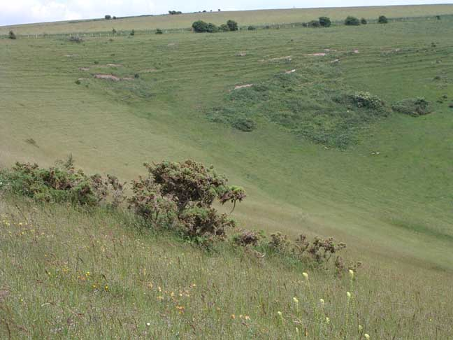 Beeding Hill and Anchor Bottom Wildlife Reports 2004