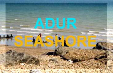 Intertidal zone seashore reports for Adur