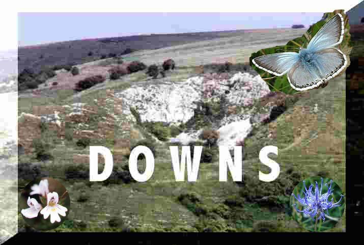 Sussex and the Downs Smart Group  (Discussion Group)