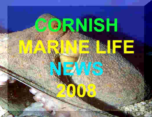 Link to Ray Dennis's Cornish Marine Life Reports for 2008