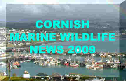 Link to Ray Dennis's Cornish Marine Life Reports for 2009