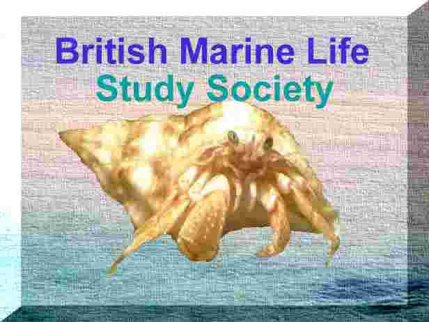 Link to the British Marine Life Study Society Homepage