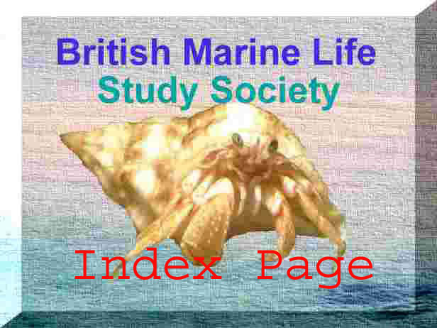 Link to the Index pages