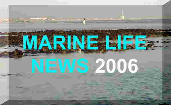 British Marine Life Study Society News (Web Pages)