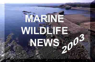Click here for the latest marine life news from around the British Isles