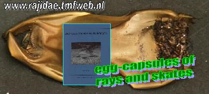 Egg Capsules of Rays and Sharks (Link)