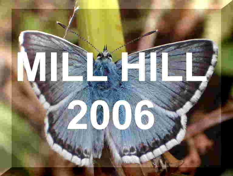 Mill Hill web pages