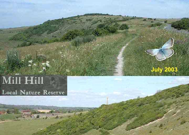 Mill Hill Wildlife Reports 2004