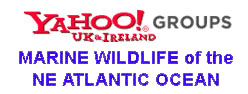 Link to the forum for marine wildlife of the NE Atlantic Ocean and adjoining seas