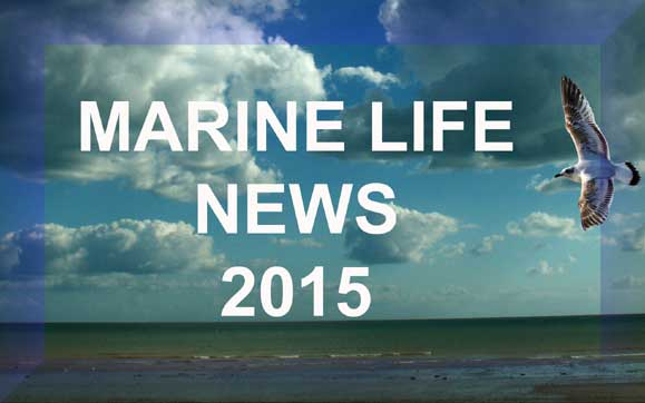 Link to MARINE LIFE NEWS 2015