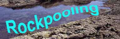 Rockpooling Page