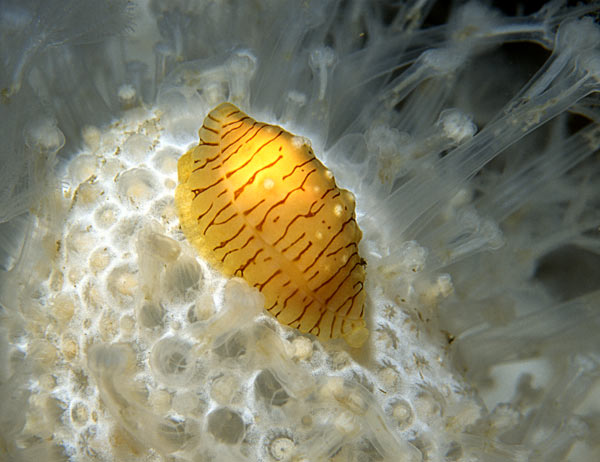 Poached Egg Shell   (Photograph by Jim Anderson)
