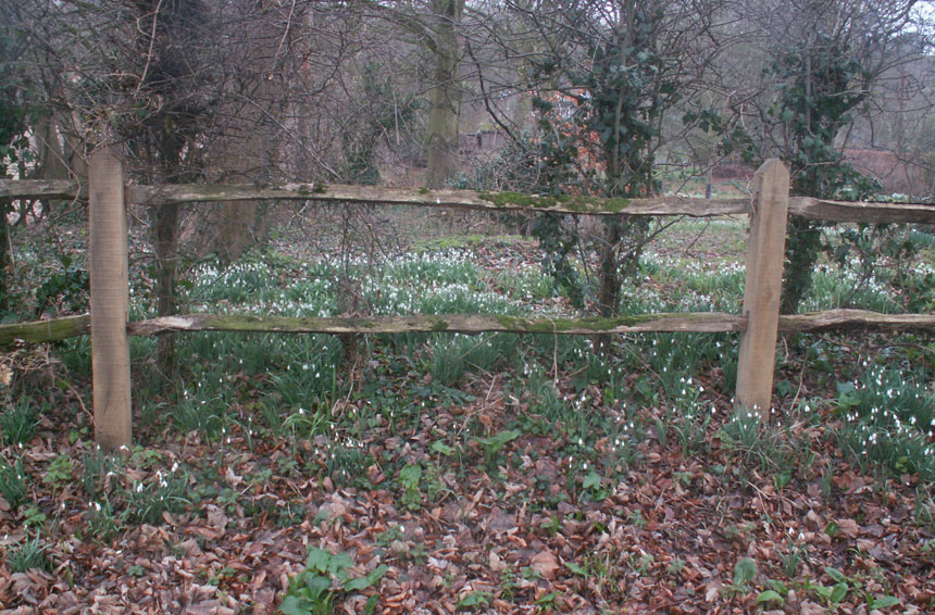Snowdrops at the Old Rectory
