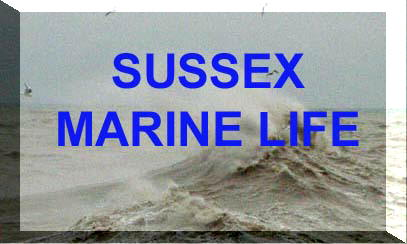Sussex marine life, centred mainly around the Adur area