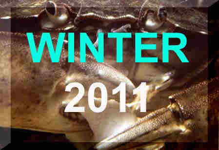 Winter 2011 News Reports, January - March