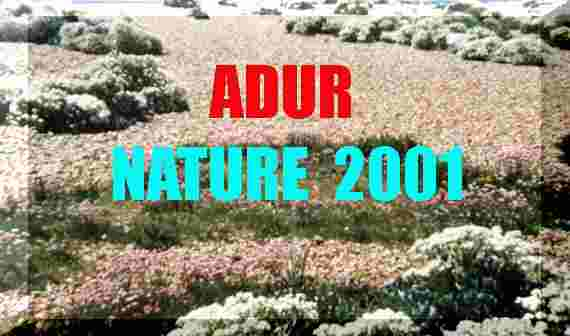 Adur Nature Notes