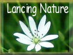Link to web pages: Lancing Nature Gallery