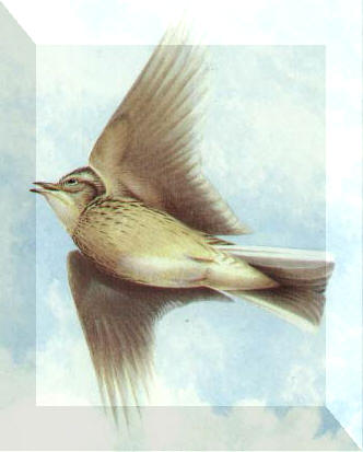 Skylark poetry book link - click on the image