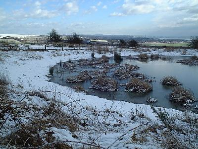 Dewpond at Lancing Clump in the snow (Photograph by Ray Hamblett)