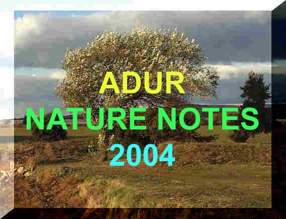 Link to the Adur Nature Notes 2004 Index page