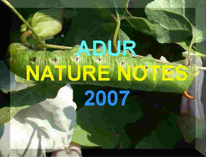 Link to the Adur Nature Notes 2007 web pages