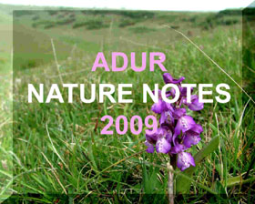 Link to the Adur Nature Notes 2009 web pages
