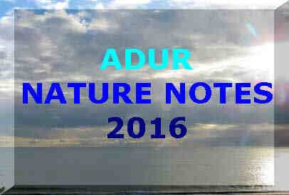 Adur Nature Notes 2016