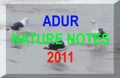 Link to the Adur Nature Notes 2011 web pages