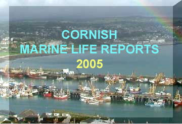 Link to the Cornish Marine Life Reports (by Ray Dennis) for 2005