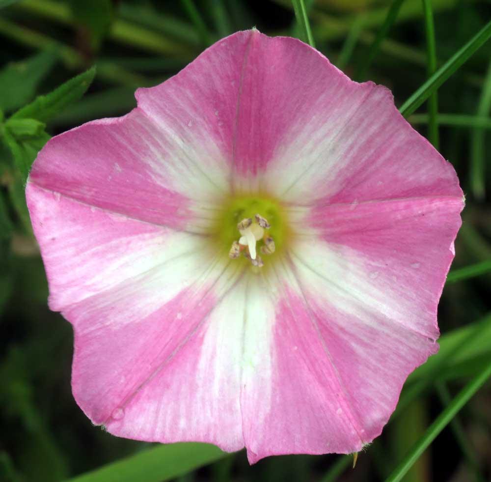 Adur Wild Flowers 2012