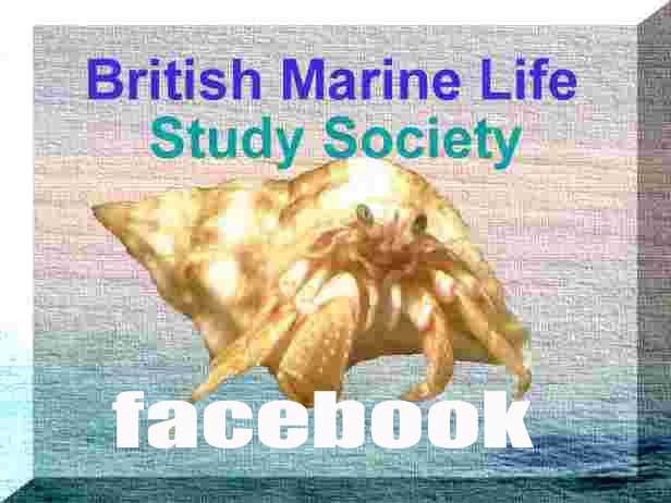 Link to the British Marine Life Study Society Facebook page