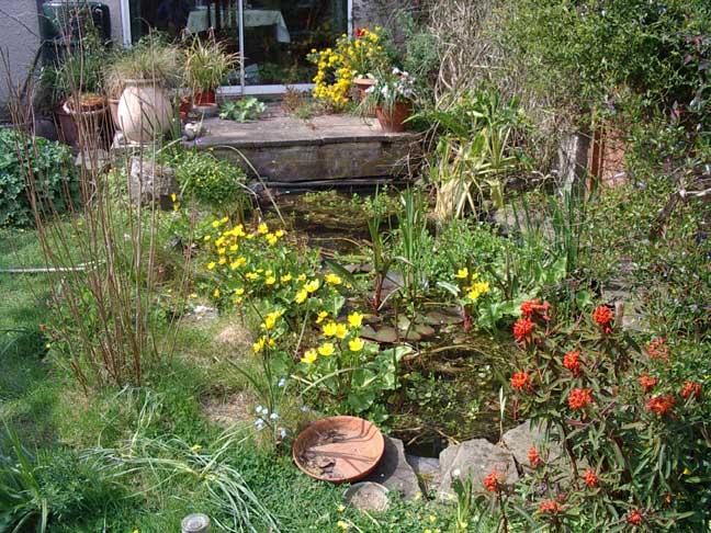 Garden pond for Garden pool uk