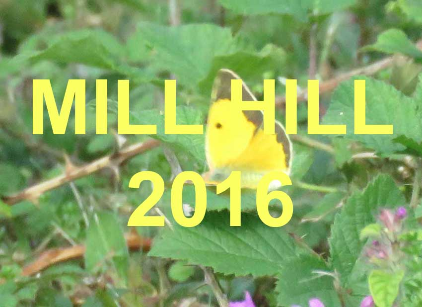 Link to the Mill Hill Nature Notes 2016 web pages