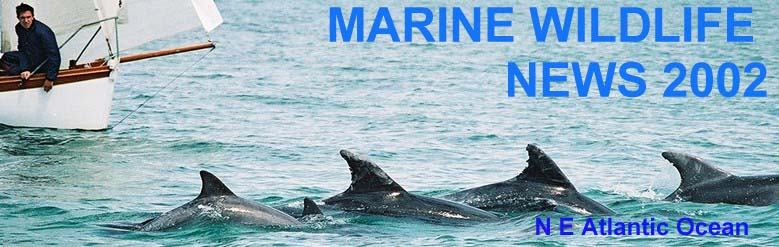 MARINE LIFE NEWS 2002  Photograph by Nicolas Jouault