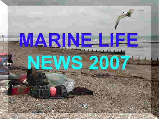 Link to the British Marine Life News 2007