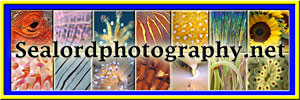 Link to Sealordphotography