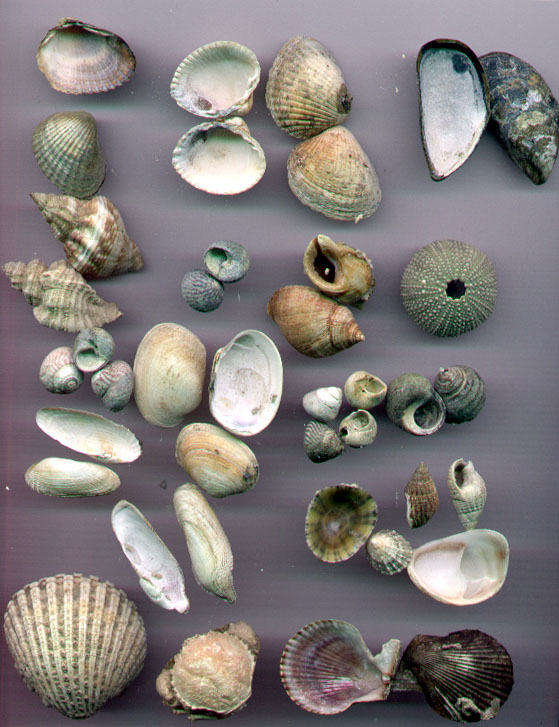 Marine Species Long Island